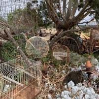 Antares Art Garden Newstead